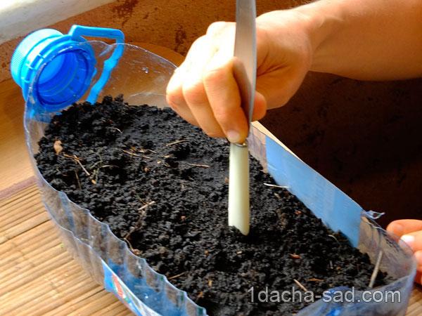 Делаю лунки для семян