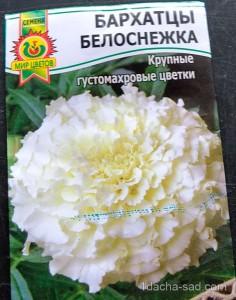 Семена бархатцев Белоснежка