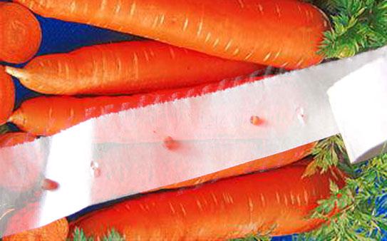 Семена моркови на бумаге