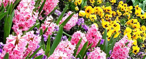 Цветущие все лето