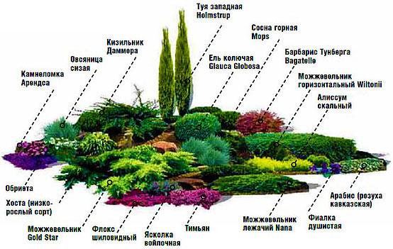 Посадить цветы по схеме