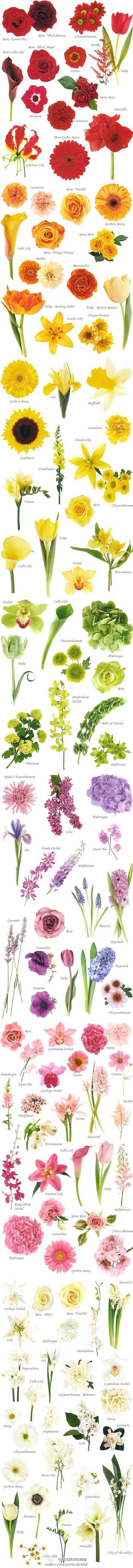 Цветы на клумбу - сочетания садовых цветов