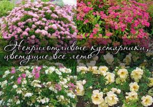 Кустарники цветущие все лето
