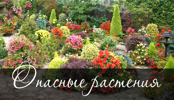 Ядовитые растения и кустарники в саду