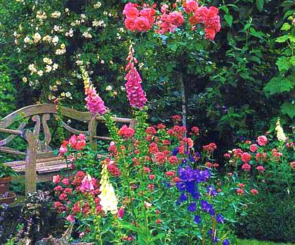 Кентрантус в саду