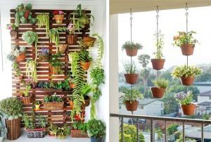 ампельные растения для балконов
