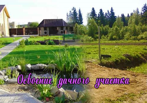 Освоение дачного участка под огород