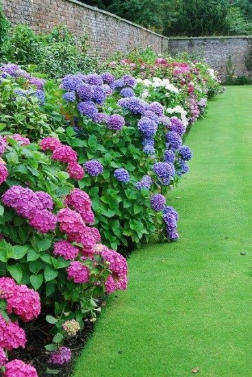 Как Правильно Посадить и Вырастить Гортензию в Саду на Даче