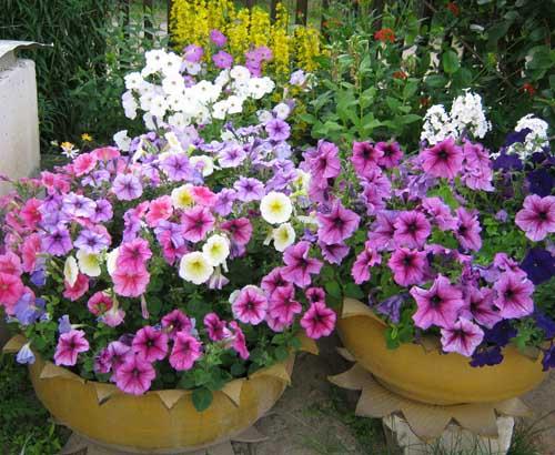 Дачный Участок — 30 идей Красивых Цветников на Даче